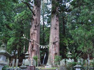 翁スギ媼スギ 夏井諏訪神社