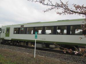 JR磐越東線の電車 桜