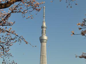 桜と東京スカイツリー 隅田公園