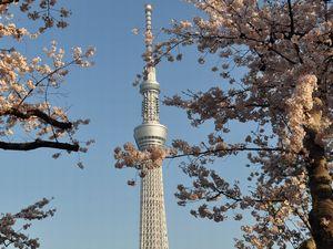 ソメイヨシノと東京スカイツリー
