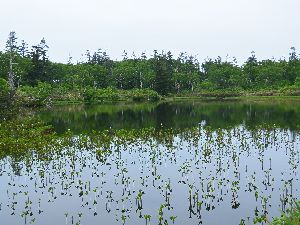 神仙沼 赤エゾ松