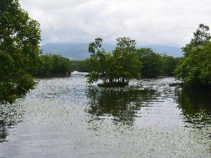 大沼湖上の島と駒ケ岳