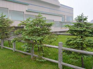 サミット記念植樹