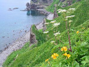 エゾカンゾウと水無しの立岩 神威岬