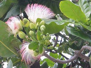 樹に沢山咲く花