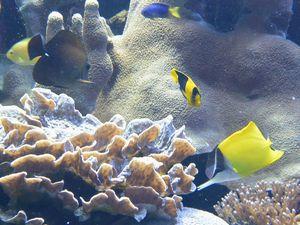 サンゴとフエヤッコダイ