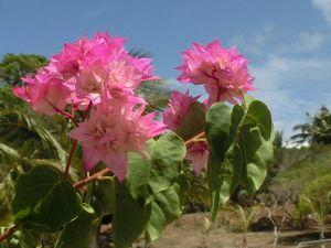 青空とピンクの花