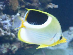 http://toc.eco.coocan.jp/pf/e15/ニューカレドニア ラグーン水族館