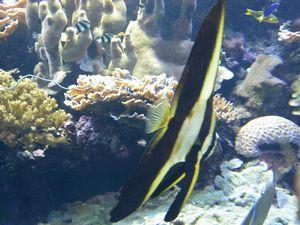 サンゴと熱帯魚