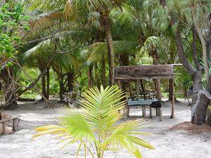 ブラウ島のヤシの木