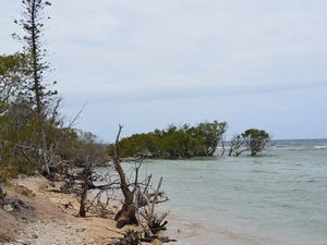 サンゴ礁でシュノーケリング